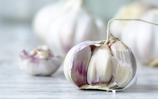 Garlic bulb PUBLICATIONxINxGERxSUIxAUTxHUNxONLY ODF001142  garlic Bulb PUBLICATIONxINxGERxSUIxAUTxHUNxONLY ODF001142