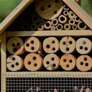 Insekten-Schutz